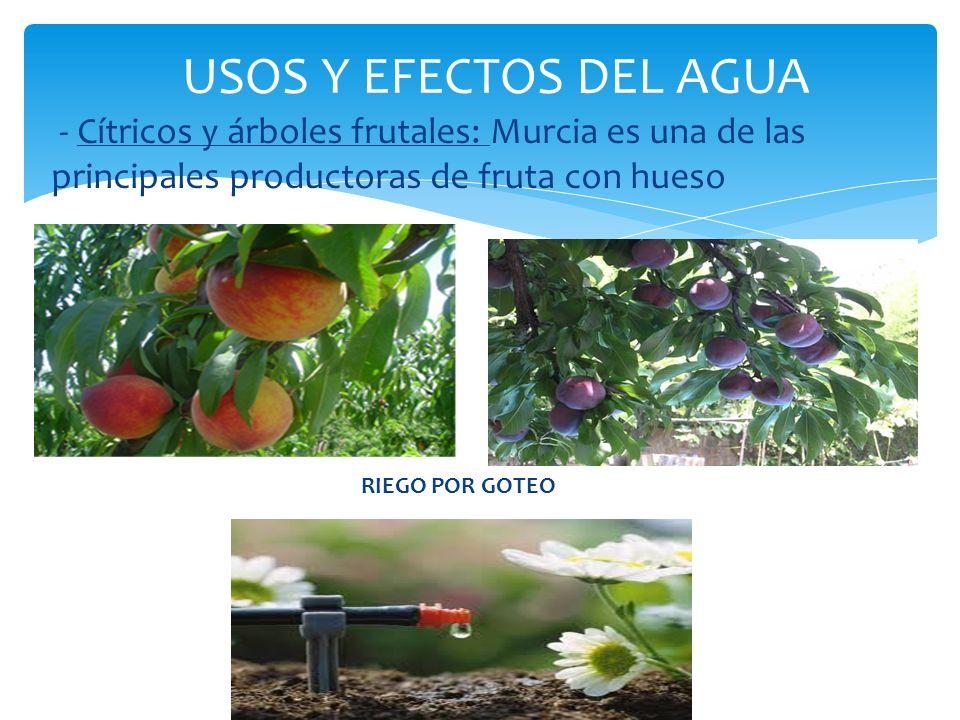 - Cítricos y árboles frutales: Murcia es una de las principales productoras de fruta con hueso USOS Y EFECTOS DEL AGUA RIEGO POR GOTEO