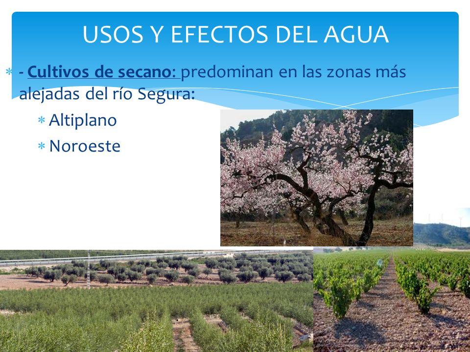USOS Y EFECTOS DEL AGUA - Cultivos de secano: predominan en las zonas más alejadas del río Segura: Altiplano Noroeste