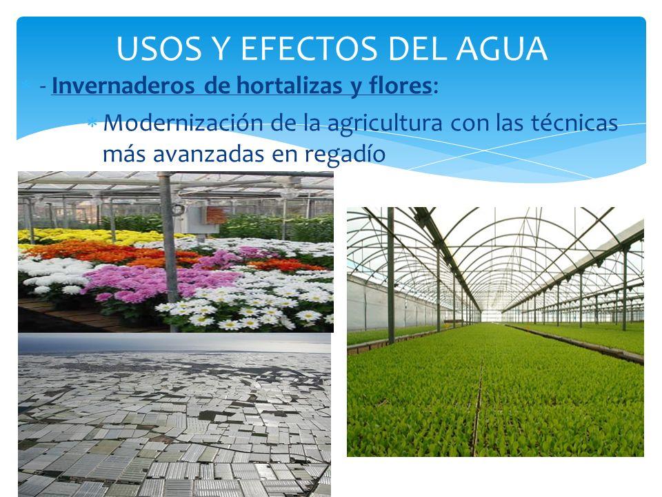 USOS Y EFECTOS DEL AGUA - Invernaderos de hortalizas y flores: Modernización de la agricultura con las técnicas más avanzadas en regadío