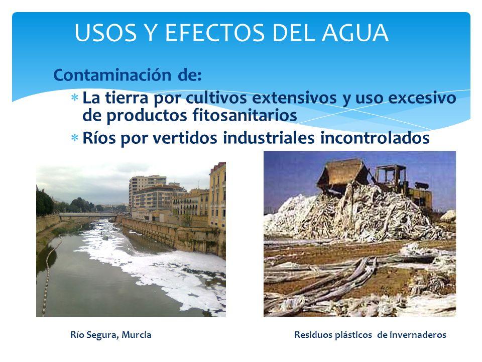 Contaminación de: La tierra por cultivos extensivos y uso excesivo de productos fitosanitarios Ríos por vertidos industriales incontrolados Río Segura