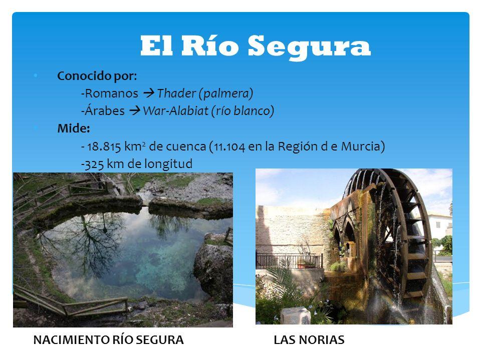 El Río Segura Conocido por: -Romanos Thader (palmera) -Árabes War-Alabiat (río blanco) Mide: - 18.815 km 2 de cuenca (11.104 en la Región d e Murcia)