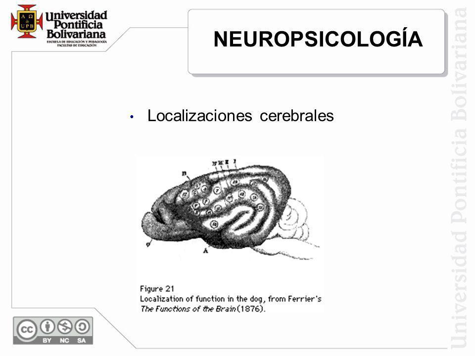 NEUROPSICOLOGÍA Localizaciones cerebrales