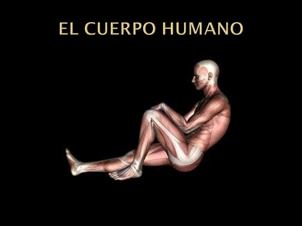 Adiestrar al ser humano para hacer un buen uso de su cuerpo, mente, alma y vida, para vivir bien; lo cual quiere decir que es adiestrarse para su prop