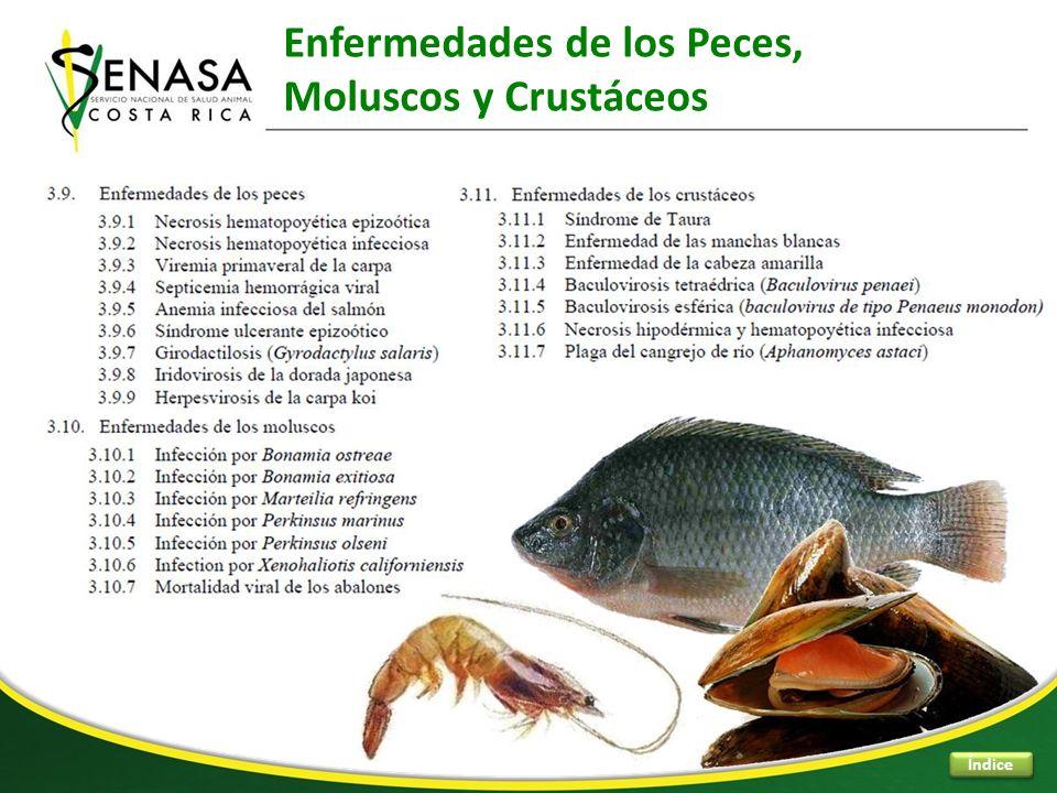 Enfermedades de los Peces, Moluscos y Crustáceos Índice