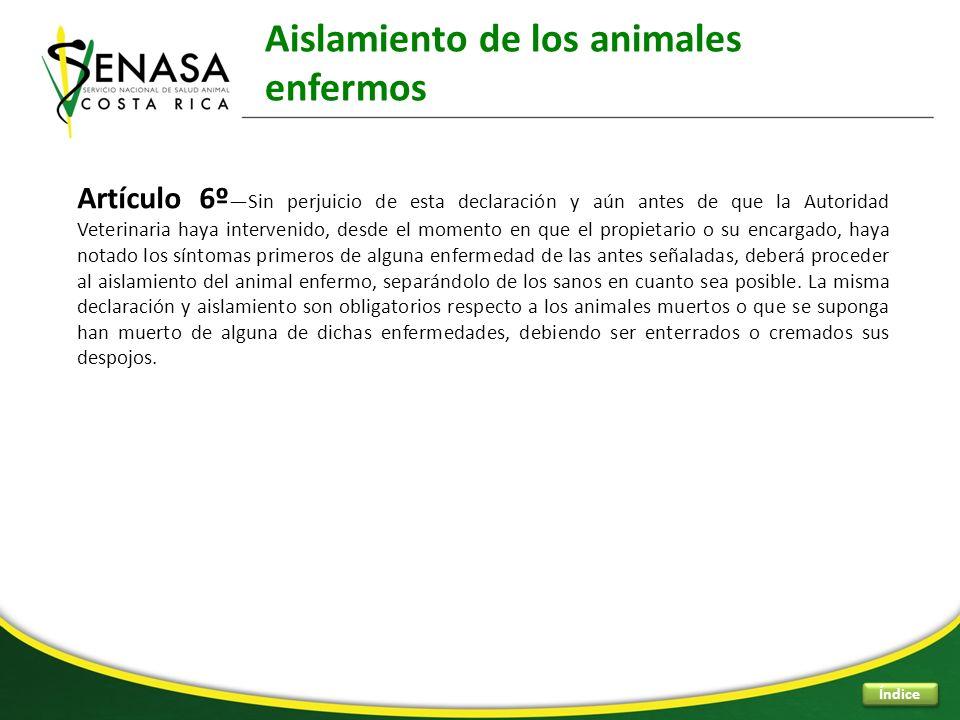 Aislamiento de los animales enfermos Índice Artículo 6º Sin perjuicio de esta declaración y aún antes de que la Autoridad Veterinaria haya intervenido
