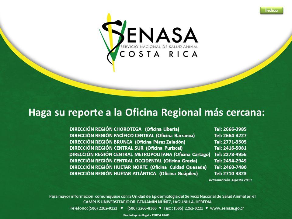 Haga su reporte a la Oficina Regional más cercana: DIRECCIÓN REGIÓN CHOROTEGA (Oficina Liberia) Tel: 2666-3985 DIRECCIÓN REGIÓN PACÍFICO CENTRAL (Ofic