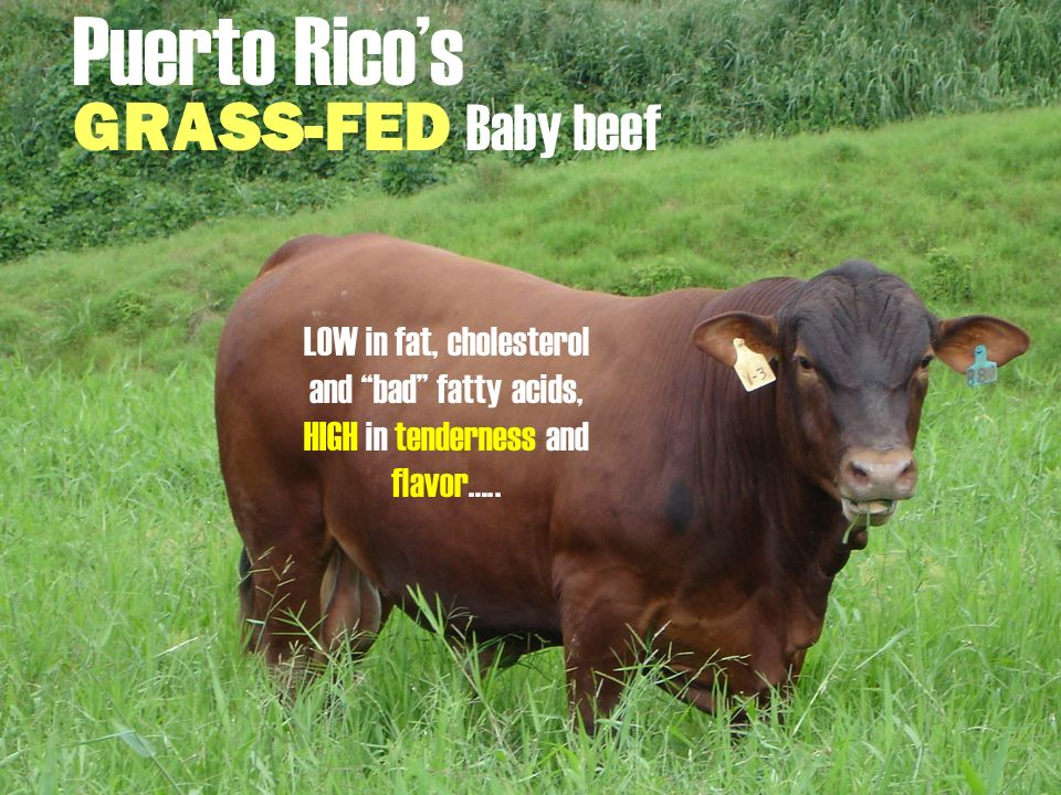 Puerto Ricos GRASS-FED Baby beef LOW in fat, cholesterol and bad fatty acids, HIGH in tenderness and flavor…..