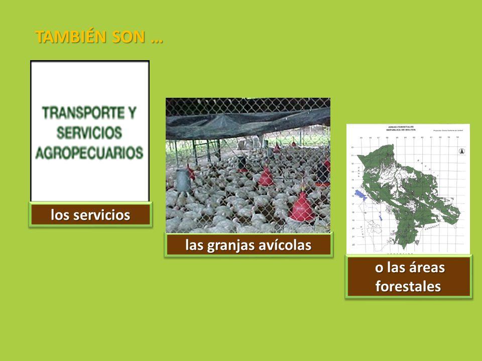 los servicios las granjas avícolas o las áreas forestales o las áreas forestales TAMBIÉN SON …