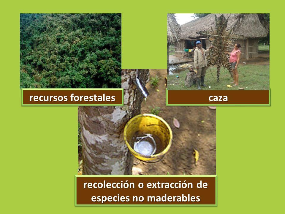 recursos forestales cazacaza recolección o extracción de especies no maderables