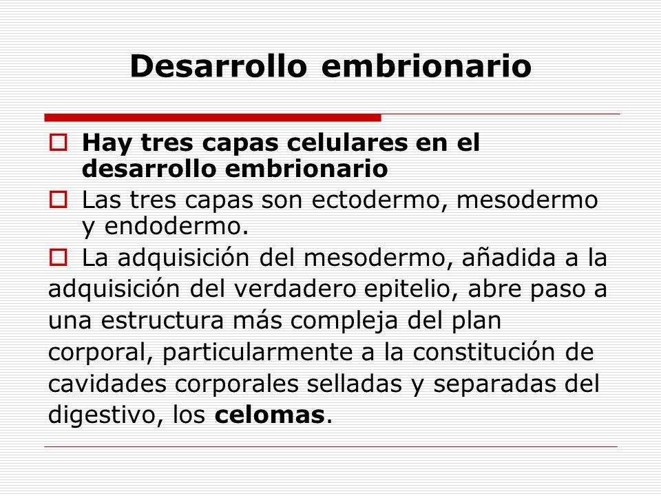 Desarrollo embrionario Hay tres capas celulares en el desarrollo embrionario Las tres capas son ectodermo, mesodermo y endodermo.