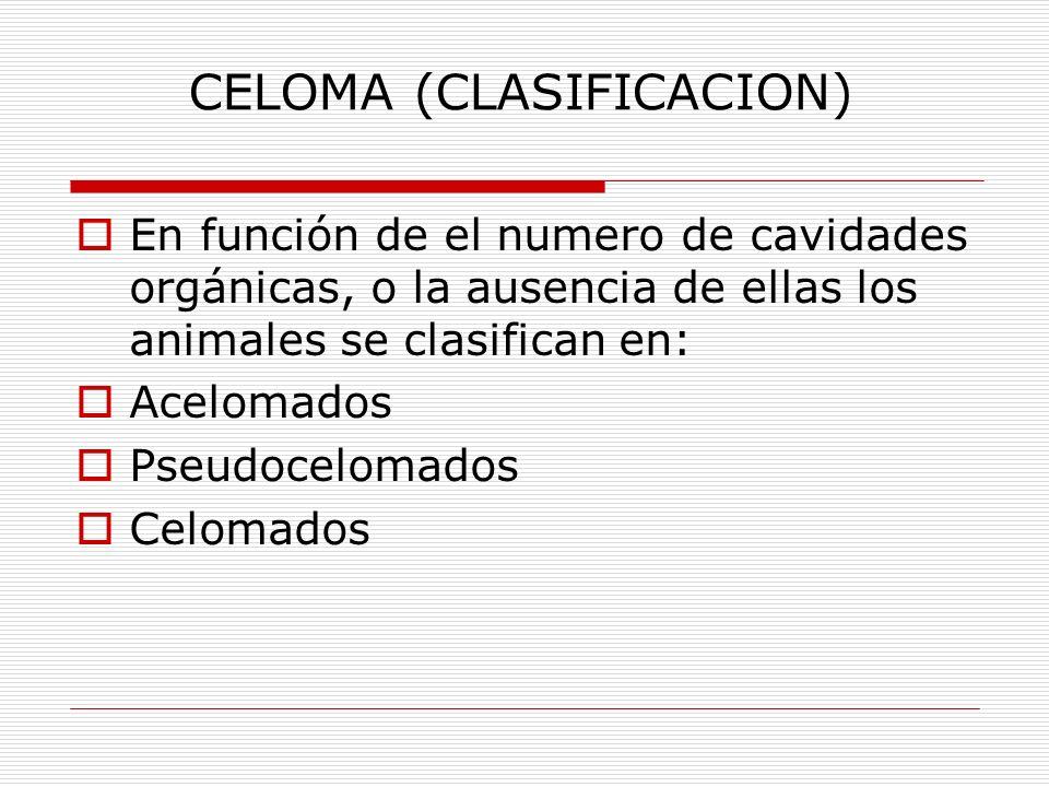 CELOMA (CLASIFICACION) En función de el numero de cavidades orgánicas, o la ausencia de ellas los animales se clasifican en: Acelomados Pseudocelomados Celomados