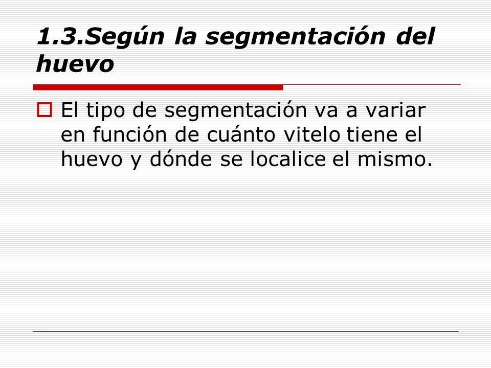 1.3.Según la segmentación del huevo El tipo de segmentación va a variar en función de cuánto vitelo tiene el huevo y dónde se localice el mismo.