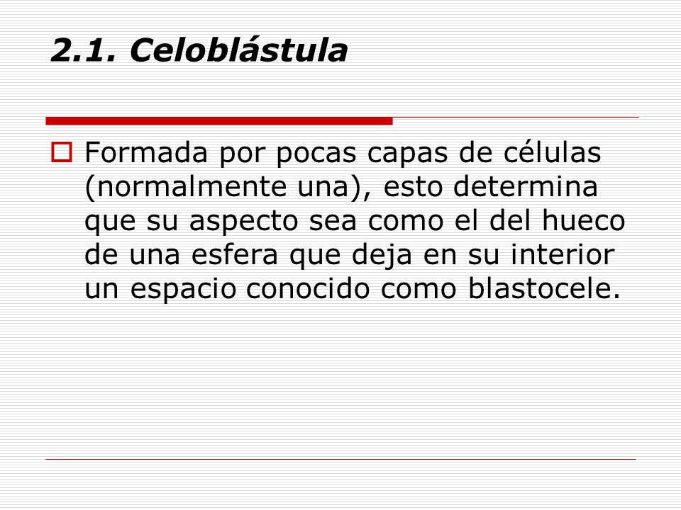 2.1. Celoblástula Formada por pocas capas de células (normalmente una), esto determina que su aspecto sea como el del hueco de una esfera que deja en