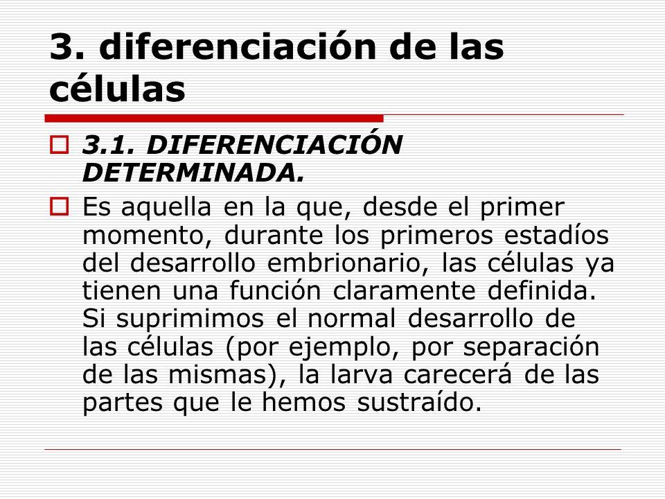 3. diferenciación de las células 3.1. DIFERENCIACIÓN DETERMINADA. Es aquella en la que, desde el primer momento, durante los primeros estadíos del des