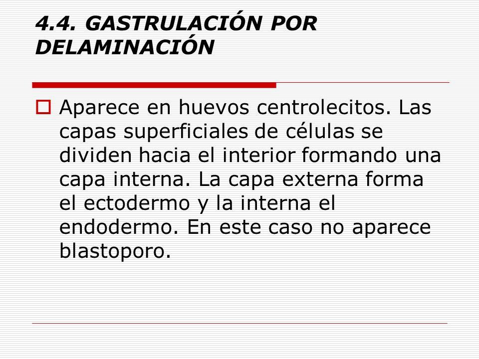 4.4.GASTRULACIÓN POR DELAMINACIÓN Aparece en huevos centrolecitos.