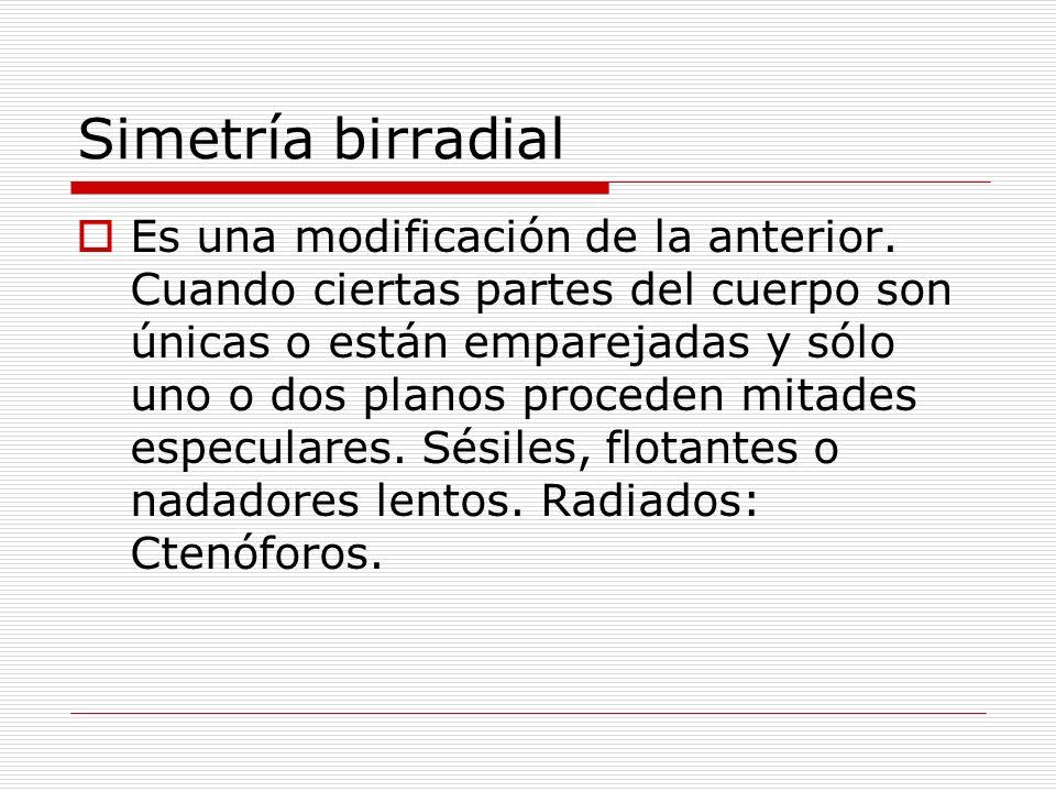 Simetría birradial Es una modificación de la anterior.