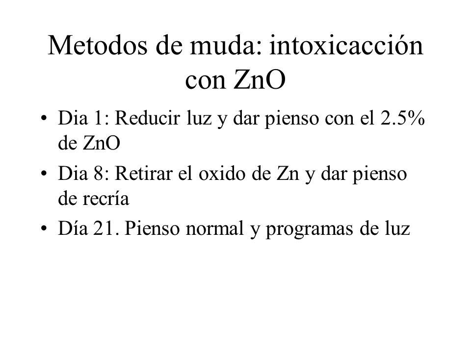 Metodos de muda: intoxicacción con ZnO Dia 1: Reducir luz y dar pienso con el 2.5% de ZnO Dia 8: Retirar el oxido de Zn y dar pienso de recría Día 21.