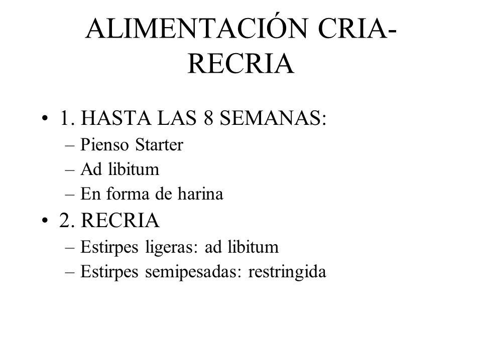 ALIMENTACIÓN CRIA- RECRIA 1. HASTA LAS 8 SEMANAS: –Pienso Starter –Ad libitum –En forma de harina 2. RECRIA –Estirpes ligeras: ad libitum –Estirpes se