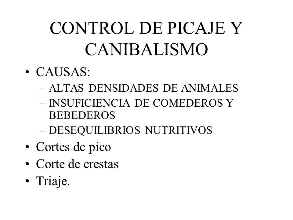 CONTROL DE PICAJE Y CANIBALISMO CAUSAS: –ALTAS DENSIDADES DE ANIMALES –INSUFICIENCIA DE COMEDEROS Y BEBEDEROS –DESEQUILIBRIOS NUTRITIVOS Cortes de pic