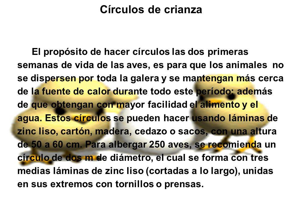 Círculos de crianza El propósito de hacer círculos las dos primeras semanas de vida de las aves, es para que los animales no se dispersen por toda la