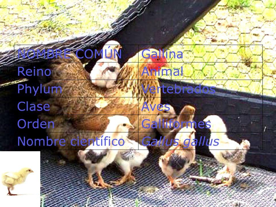CLASIFICACION DEL HUEVO CLASIFICACIONPESO (g) Especial> 68 Extra grande> 61 <= 68 Grande> 54 <= 61 Mediano> 47 <= 54 Chico> 40 <= 47 Muy chico<= 40