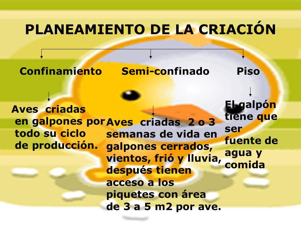 PLANEAMIENTO DE LA CRIACIÓN Confinamiento Semi-confinadoPiso Aves criadas en galpones por todo su ciclo de producción. Aves criadas 2 o 3 semanas de v