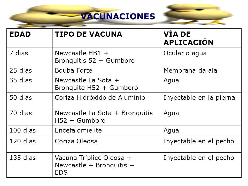 VACUNACIONES EDADTIPO DE VACUNAVÍA DE APLICACIÓN 7 diasNewcastle HB1 + Bronquitis 52 + Gumboro Ocular o agua 25 diasBouba ForteMembrana da ala 35 dias