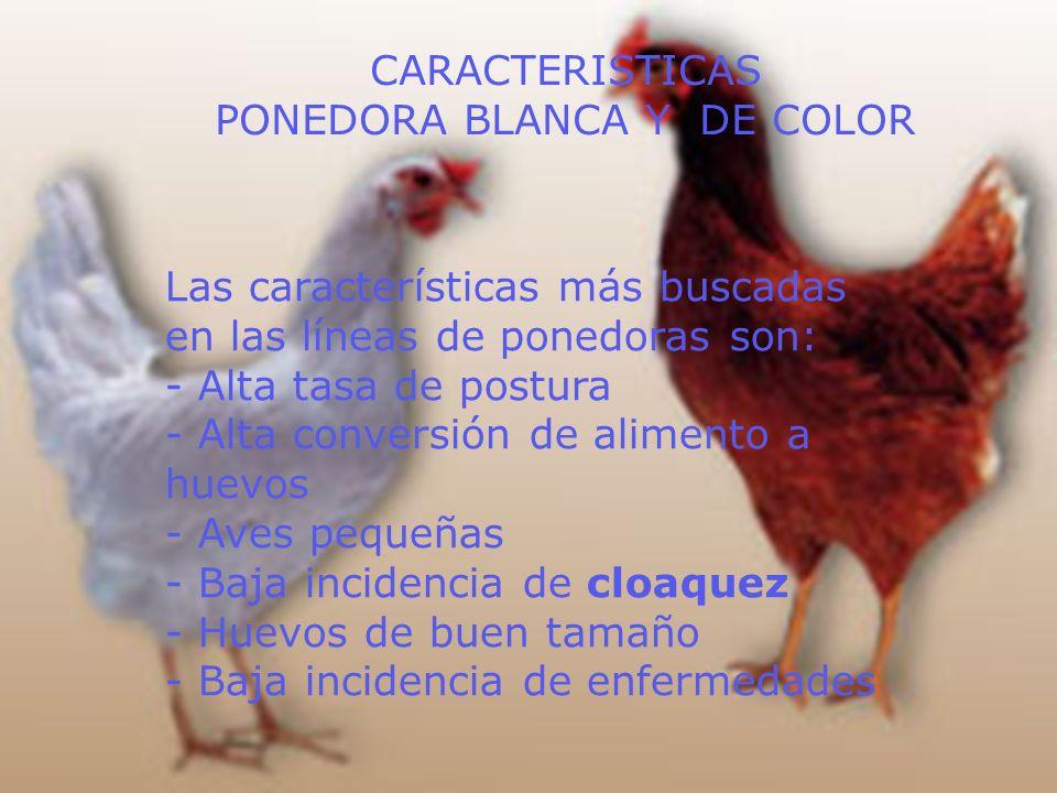 PORCENTAJE DE POSTURA DE HUEVOS BLANCOS Y DE COLOR, PARA LAS DISTINTAS CATEGORÍAS DE PESO CLACIFICACIONPESO g % DE HUEVOS BLANCOS % DE HUEVOS DE COLOR Especial> 68-- Extra grande> 61 <= 682837 Grande> 54 <= 615047 Mediano> 47 <= 54117 Chico> 40 <= 47119 Muy chico<= 40--