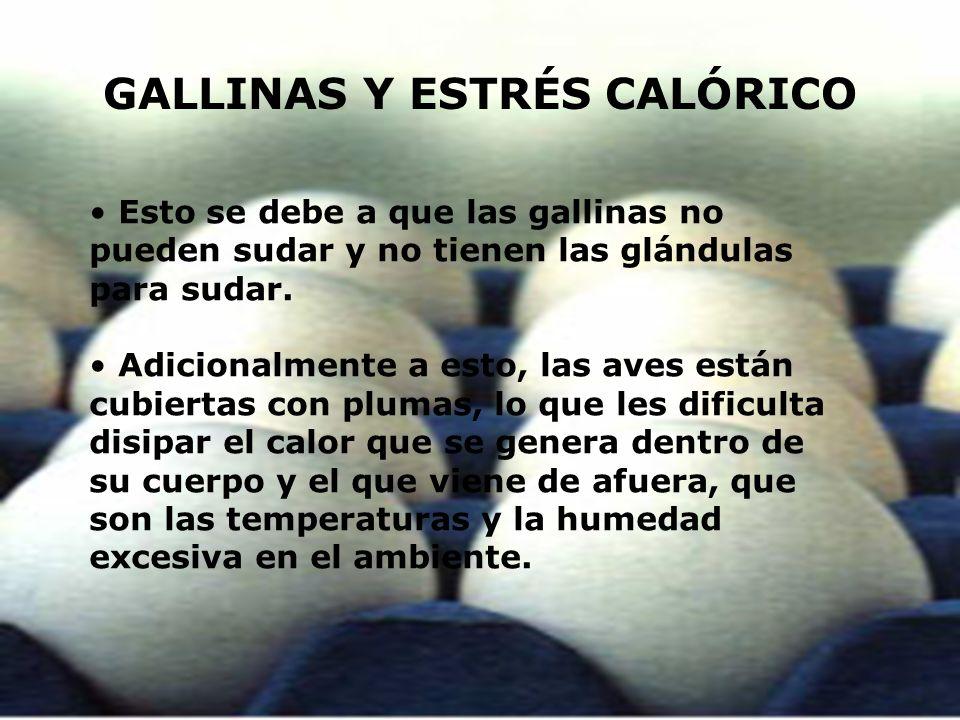 GALLINAS Y ESTRÉS CALÓRICO Esto se debe a que las gallinas no pueden sudar y no tienen las glándulas para sudar. Adicionalmente a esto, las aves están