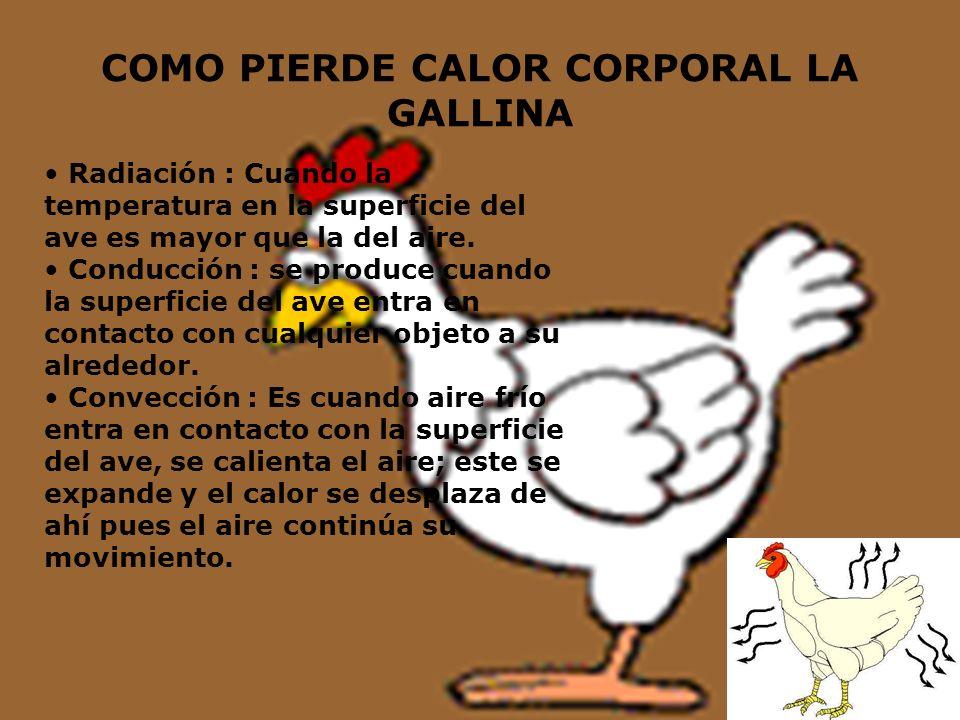 COMO PIERDE CALOR CORPORAL LA GALLINA Radiación : Cuando la temperatura en la superficie del ave es mayor que la del aire. Conducción : se produce cua