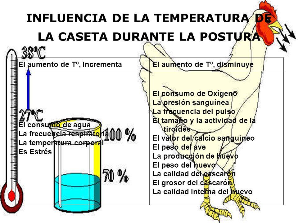 INFLUENCIA DE LA TEMPERATURA DE LA CASETA DURANTE LA POSTURA El aumento de Tº, IncrementaEl aumento de Tº, disminuye El consumo de agua La frecuencia