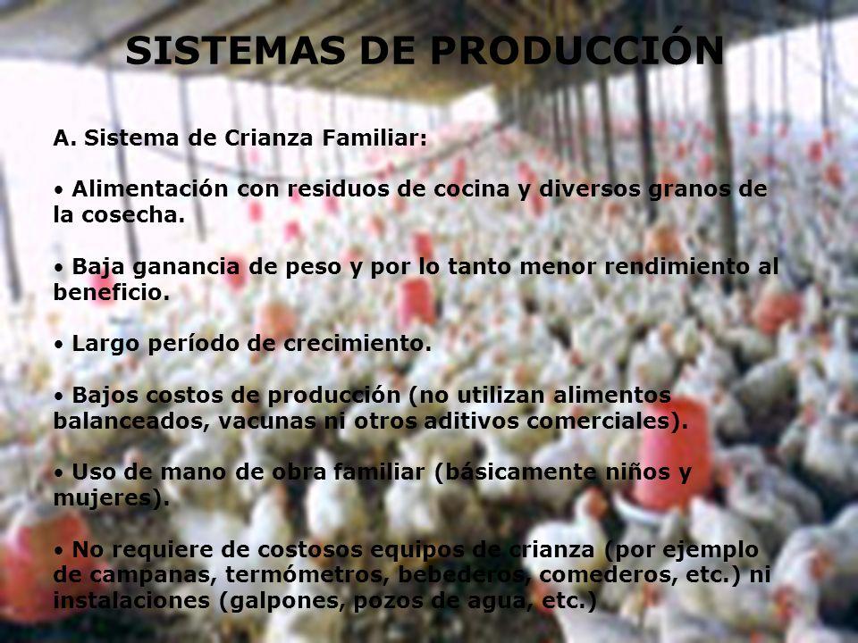 SISTEMAS DE PRODUCCIÓN A. Sistema de Crianza Familiar: Alimentación con residuos de cocina y diversos granos de la cosecha. Baja ganancia de peso y po
