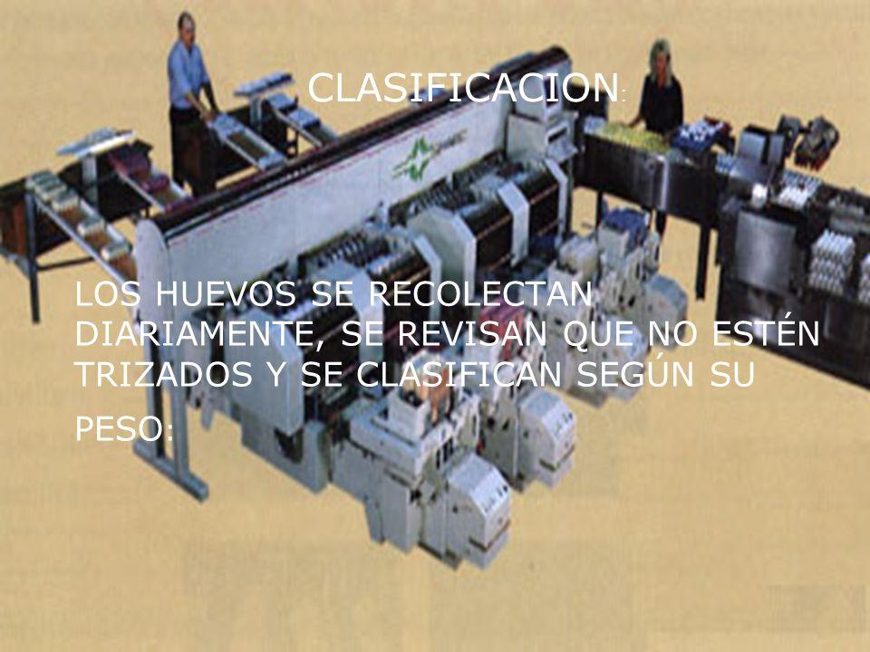 LOS HUEVOS SE RECOLECTAN DIARIAMENTE, SE REVISAN QUE NO ESTÉN TRIZADOS Y SE CLASIFICAN SEGÚN SU PESO : CLASIFICACION :