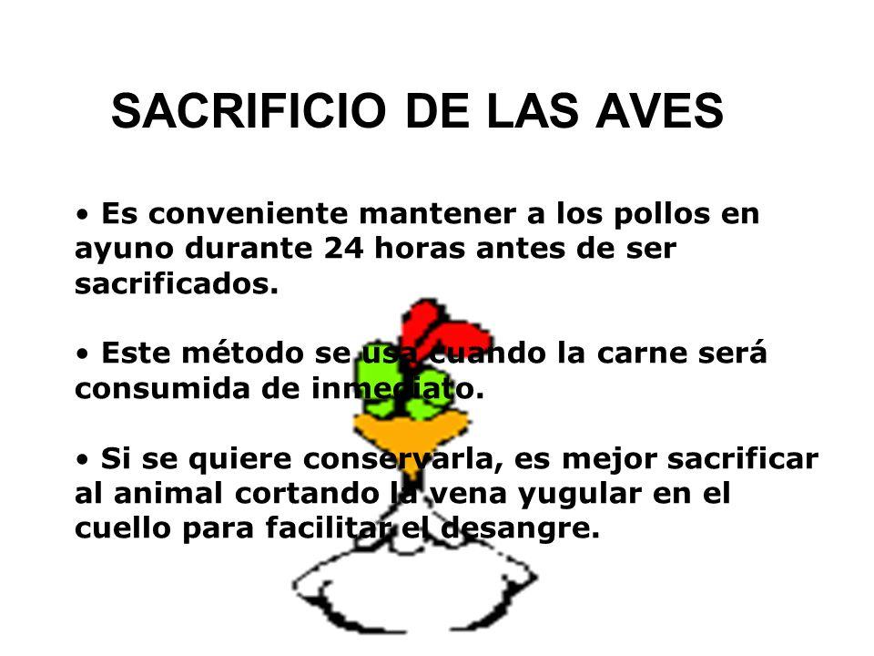 SACRIFICIO DE LAS AVES Es conveniente mantener a los pollos en ayuno durante 24 horas antes de ser sacrificados. Este método se usa cuando la carne se