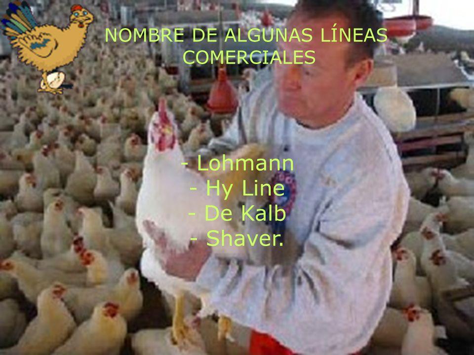 INSTALACINES El tamaño del gallinero estará en función de la cantidad de gallinas que se puedan criar.