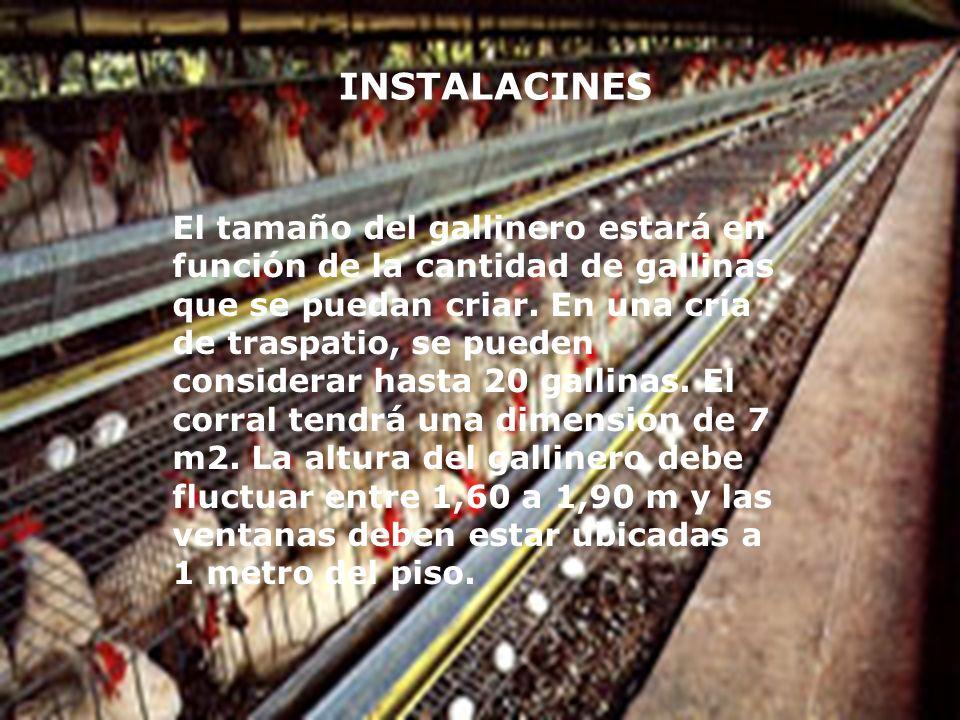 INSTALACINES El tamaño del gallinero estará en función de la cantidad de gallinas que se puedan criar. En una cría de traspatio, se pueden considerar