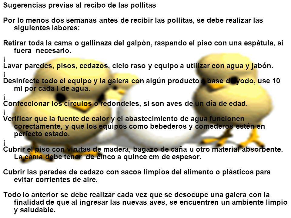 Sugerencias previas al recibo de las pollitas Por lo menos dos semanas antes de recibir las pollitas, se debe realizar las siguientes labores: Retirar