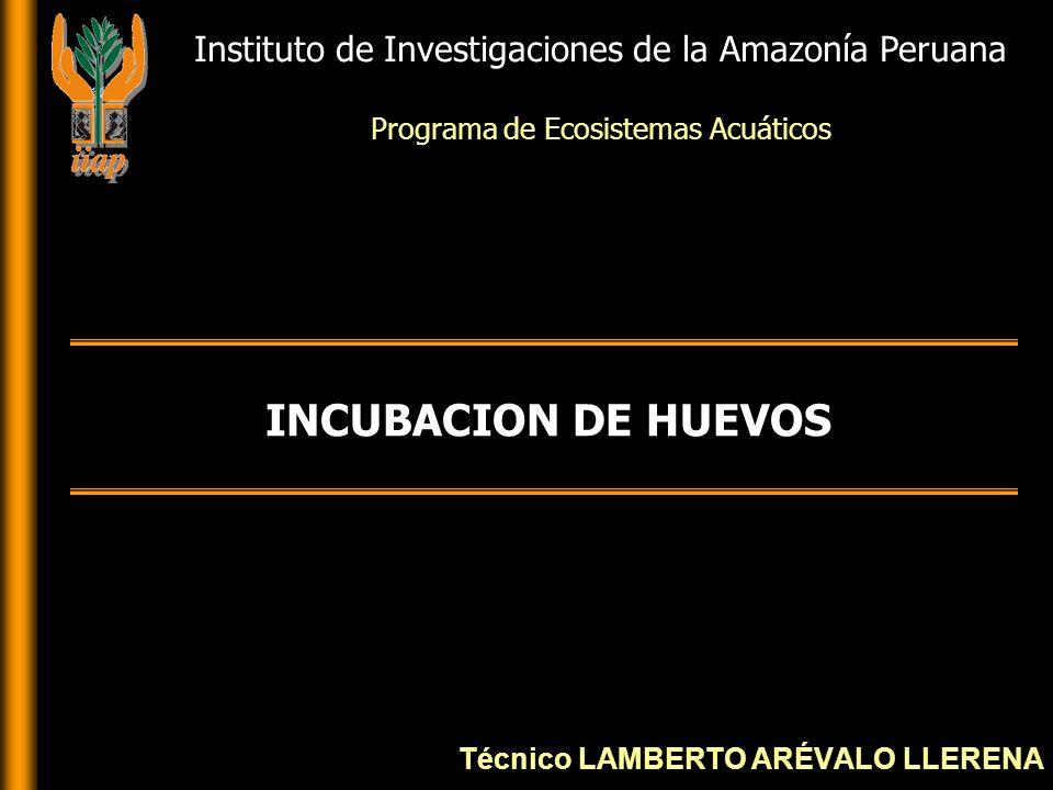 INTRODUCCION La incubación y cría de larvas son aspectos esenciales en producción
