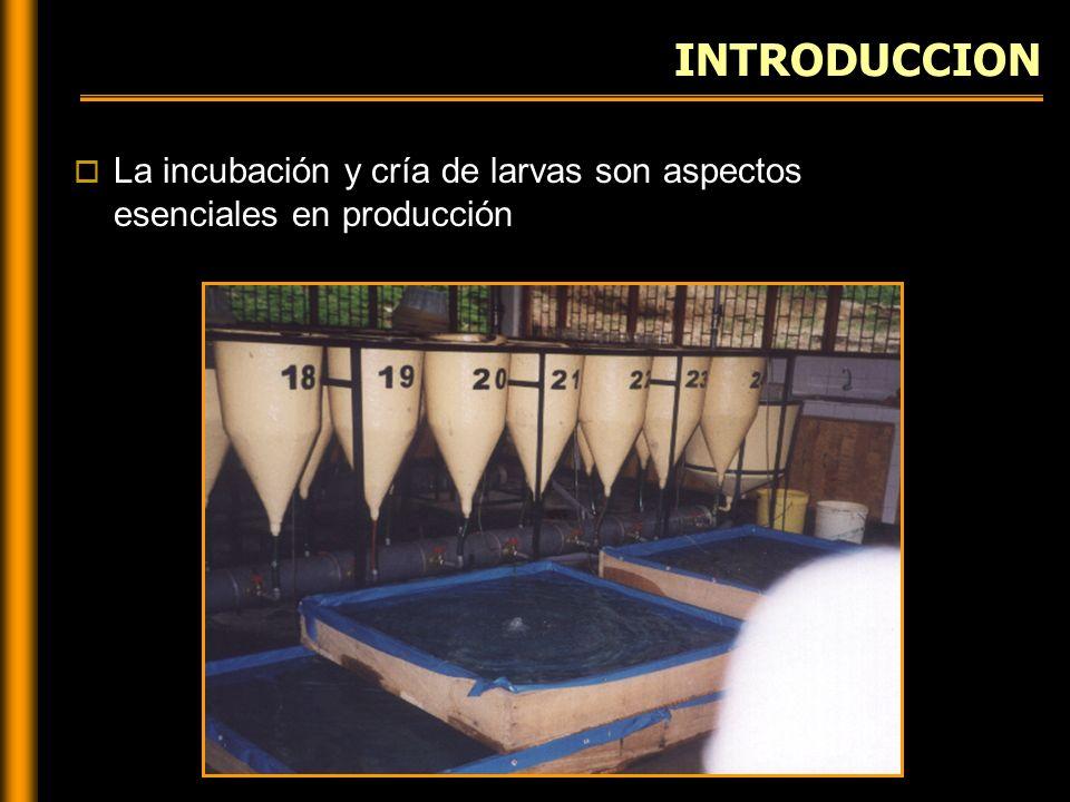 COSECHA DE LARVAS Detener el flujo de agua y aireación Sifonear las larvas del estrato superior de la incubadora Recibir las larvas en el concentrador