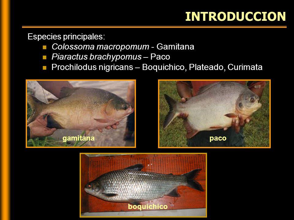 Manejo de Reproductores Desove y Fecundación Incubación PROCESO DE REPRODUCCION INDUCIDA Cosecha y cría de larvas Inducción