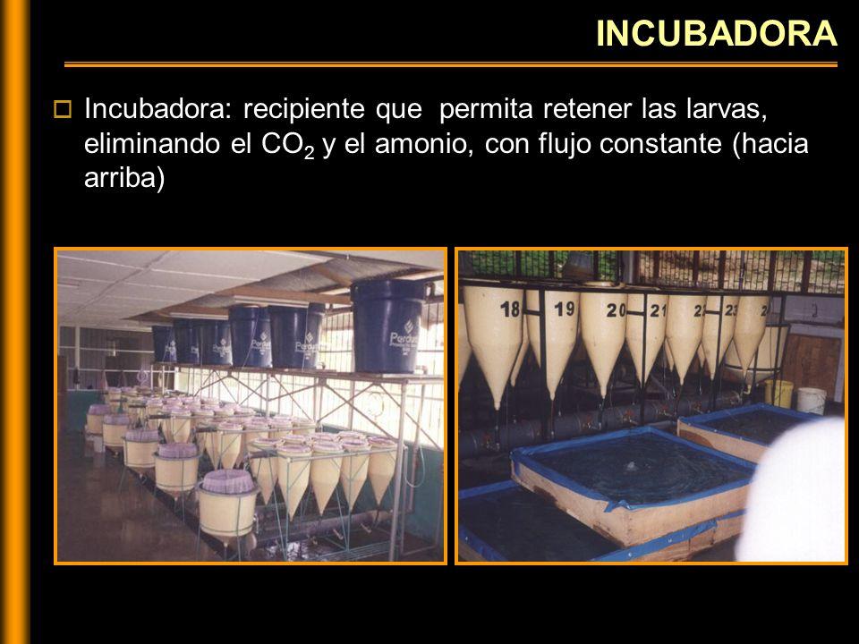 Rebose - Salida de agua Base cónica - Entrada de agua DIAGRAMA DE UNA INCUBADORA Flujo de agua constante