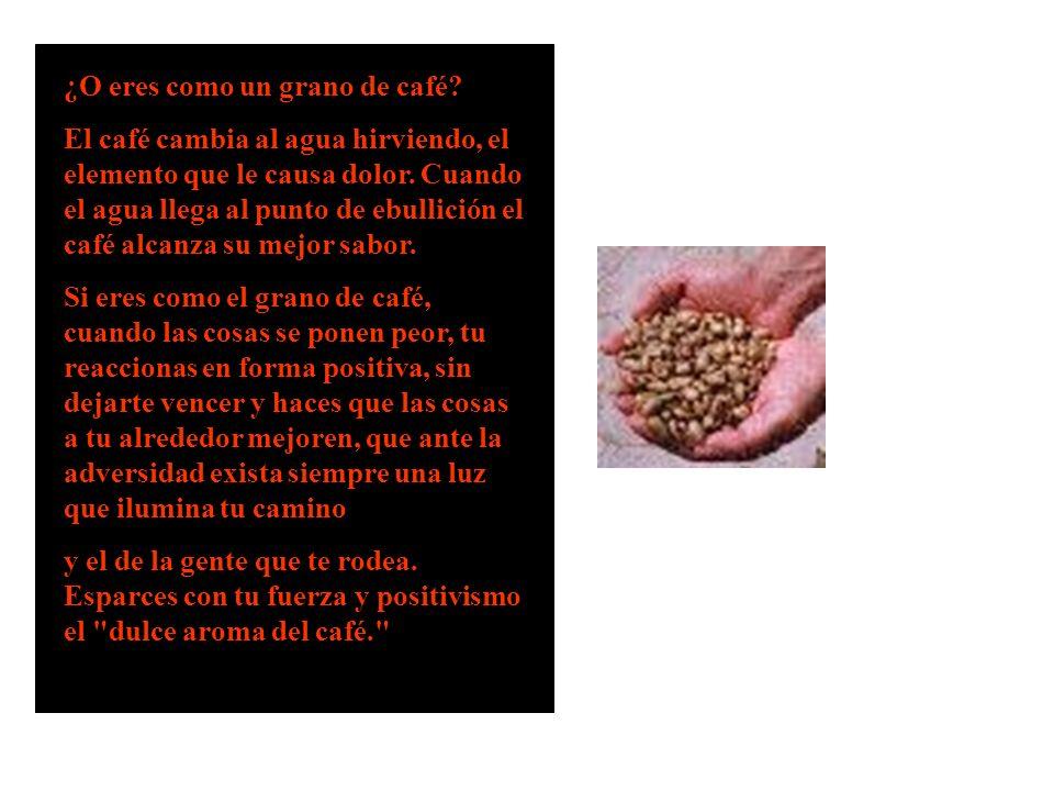 ¿O eres como un grano de café? El café cambia al agua hirviendo, el elemento que le causa dolor. Cuando el agua llega al punto de ebullición el café a