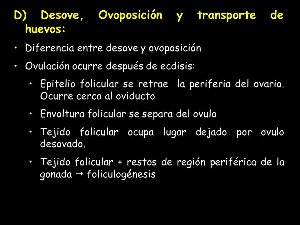 D) Desove, Ovoposición y transporte de huevos: Diferencia entre desove y ovoposición Ovulación ocurre después de ecdisis: Epitelio folicular se retrae la periferia del ovario.