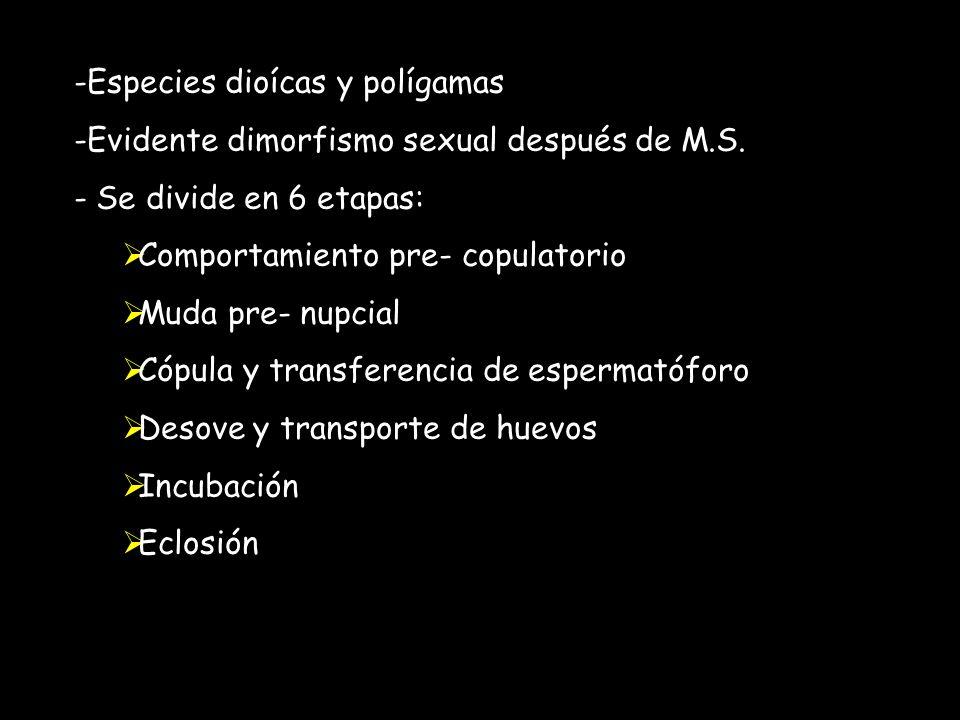 -Especies dioícas y polígamas -Evidente dimorfismo sexual después de M.S.
