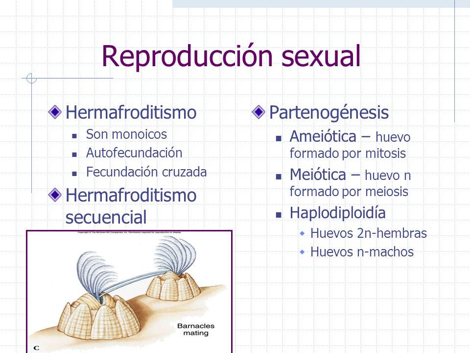 Reproducción sexual Hermafroditismo Son monoicos Autofecundación Fecundación cruzada Hermafroditismo secuencial Partenogénesis Ameiótica – huevo forma