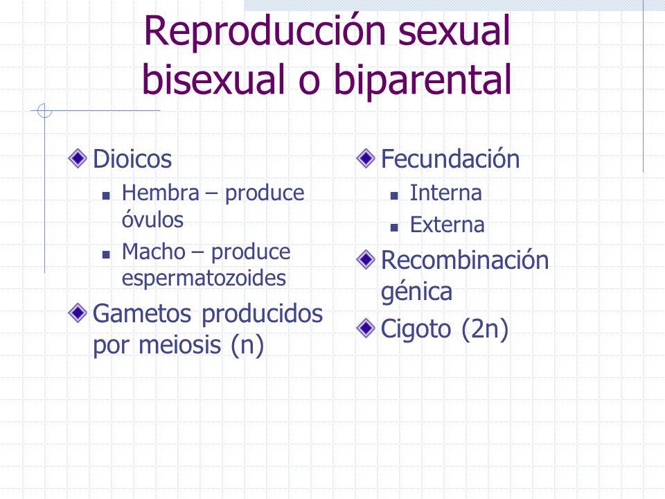 Reproducción sexual bisexual o biparental Dioicos Hembra – produce óvulos Macho – produce espermatozoides Gametos producidos por meiosis (n) Fecundaci