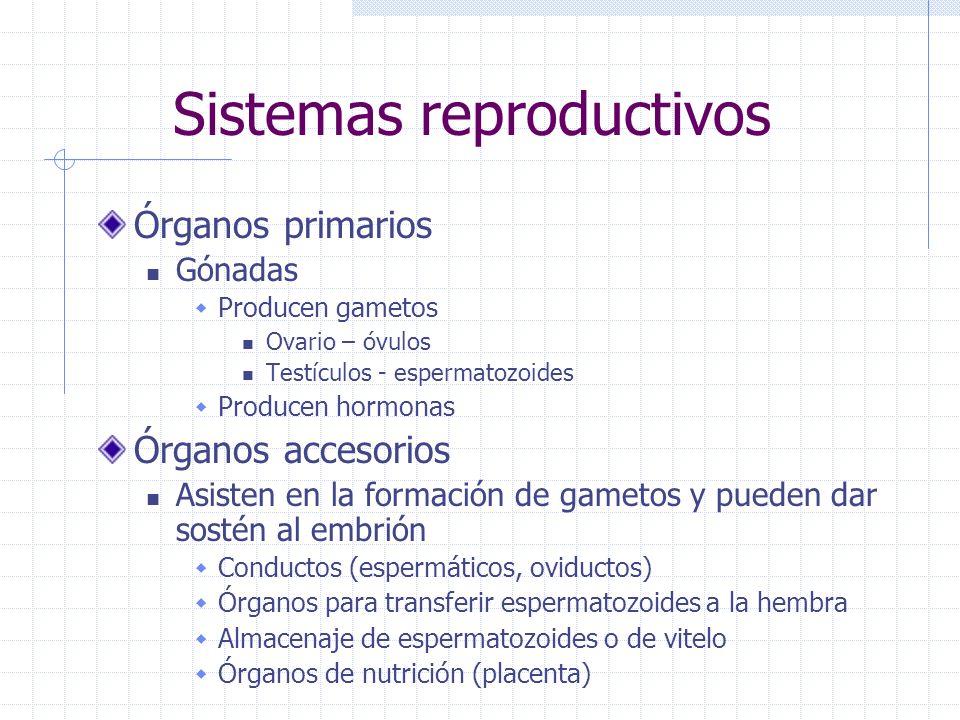 Sistemas reproductivos Órganos primarios Gónadas Producen gametos Ovario – óvulos Testículos - espermatozoides Producen hormonas Órganos accesorios As