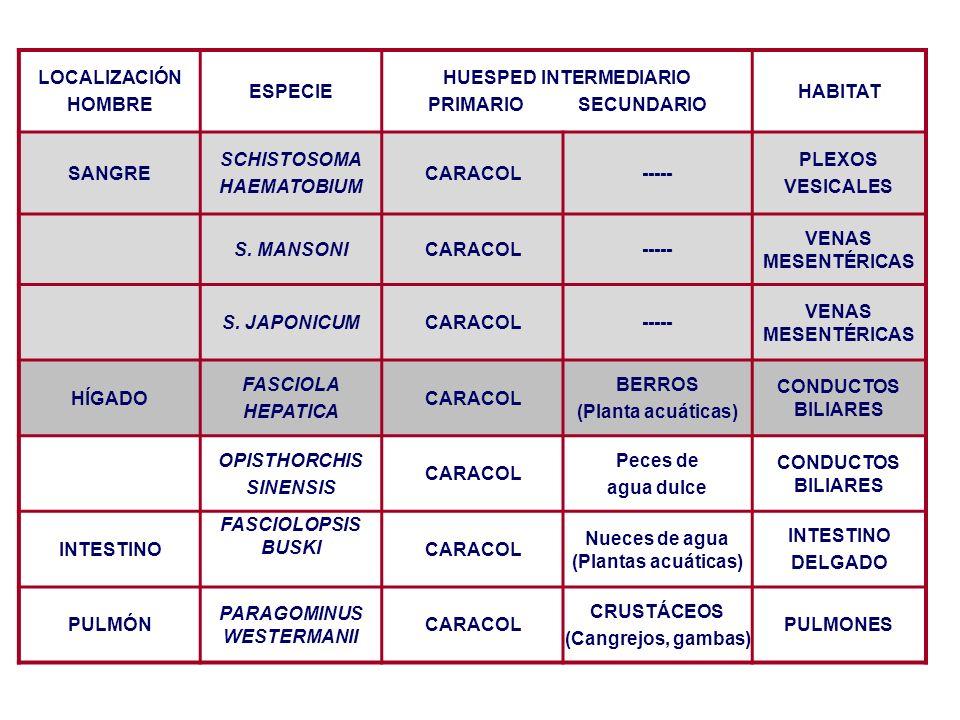 FASCIOLA HEPATICA Distribución mundial (autóctona en España).