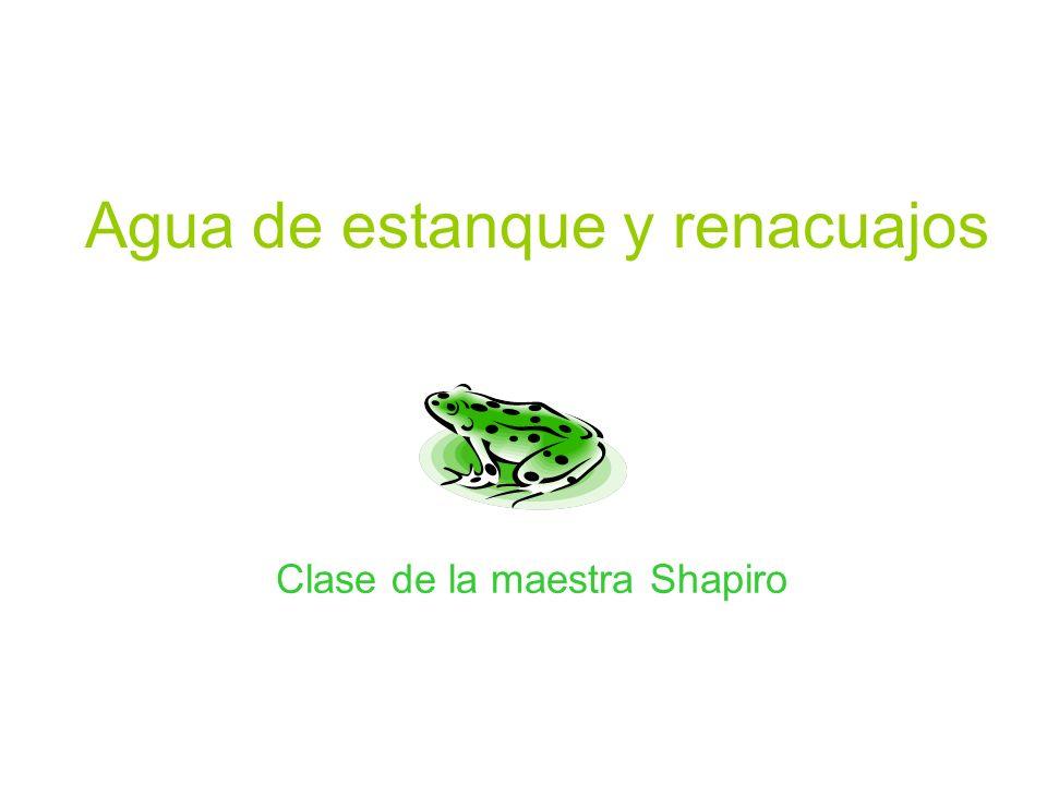 Agua de estanque y renacuajos Clase de la maestra Shapiro