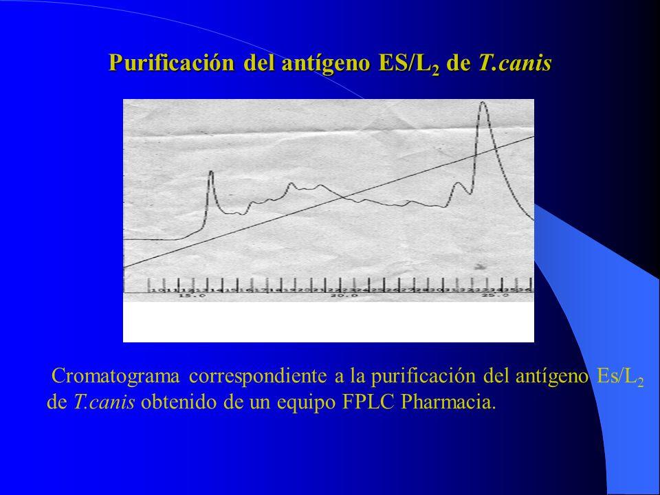 Western Blot con antígeno ES/L 2 total con suero de enfermedades parasitarias y no parasitarias